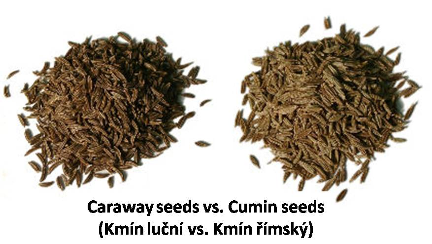 Image result for cumin and caraway